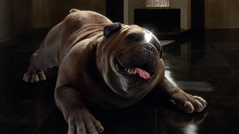 Image for 'Marvel's Inhumans': Who is Lockjaw?