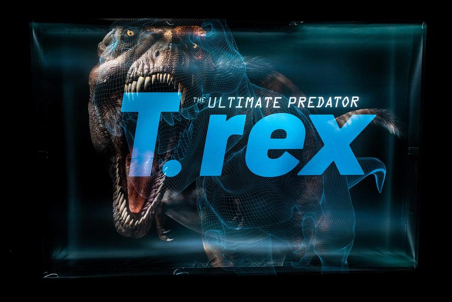 T. rex The Ultimate Predator