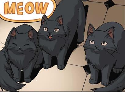 Black Cat_C