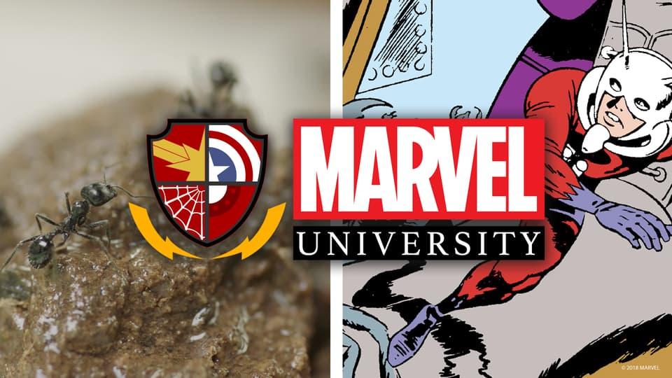 Marvel University