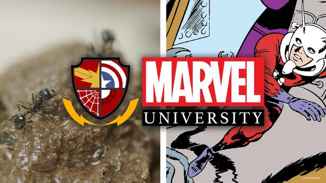Ant-Man: The Science of Ants | Marvel University