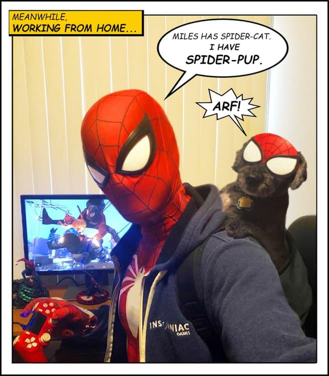 spider-pup
