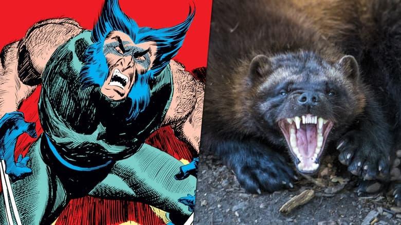 Wolverines snarling.